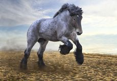 Magnificent strong and powerful stallion of the Brabanson breed Royalty Free Stock Photography