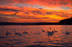 Magnificent sunset Stock Photography
