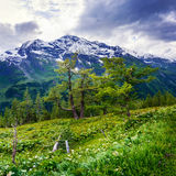 Magnificent view of the Alps Stock Photography