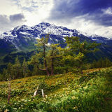 Magnificent view of the Alps Royalty Free Stock Images