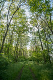 Magnificent view of forest path Royalty Free Stock Images