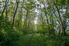 Magnificent view of forest path Stock Photos