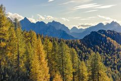 Magnificent view with golden larch forest in the foreground and. High mountains in the background. The perfect place to escape from the stress of everyday life stock photography