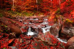 Waterfall in the autumn beech forest. Magnificent view of the waterfall in the Autumn Beech Forest in Europe Stock Photos