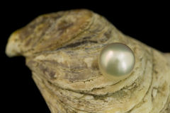 Magnificent White Pearl Stock Photography