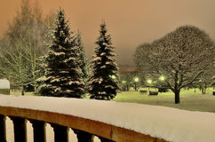 Magnificent winter landscape in the city park at night Stock Photos