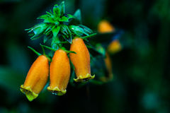 Magnified orange flowers. Macro photo of orange flowers Royalty Free Stock Image
