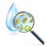 Magnifier bacteria and virus cells. Magnifier and bacteria and virus cells in water drop vector illustration Royalty Free Stock Photos