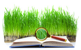 Magnifier and the book Royalty Free Stock Image