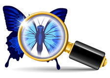 Magnifier and butterfly Stock Image