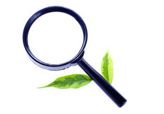 Magnifier with green leaves Royalty Free Stock Photo