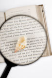 Magnifier and old book. Seashells, magnifier, and old book on the white background Royalty Free Stock Images