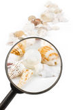 Magnifier on seashells. Magnifier on colorful seashells with white background Stock Photo