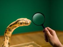 Magnifier and snake head, zoo and education concept.  Stock Images