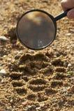 Magnifier, trekkers boot print Royalty Free Stock Image