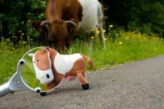 Magnifiez la vache Images libres de droits