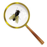Magnify fly Stock Photography