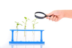 Magnify glass in child hand over plant seedling Royalty Free Stock Photo