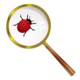 Magnify ladybird Stock Image