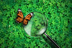 Magnifying glass with butterfly on green grass background, exploration ecology concept,   Royalty Free Stock Image