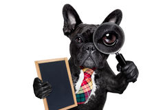 Magnifying glass dog Royalty Free Stock Photography