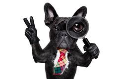Magnifying glass dog Stock Photography