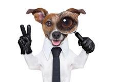 Magnifying glass dog Stock Photos