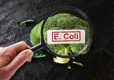 E Coli contamination. Magnifying glass examining broccoli with E Coli label Stock Images