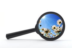 Magnifying glass and flower Royalty Free Stock Photography
