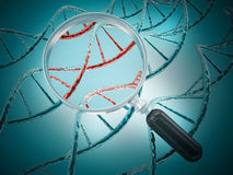 Magnifying glass focussing on a section of a DNA strand Stock Image