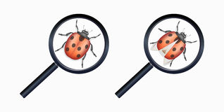Magnifying glass found a bug Stock Images