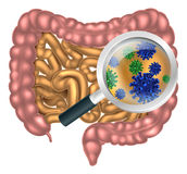 Magnifying Glass Gut Flora stock illustration