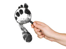 Magnifying glass in hand and foot printout. Isolated on white background royalty free stock image