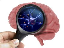 Magnifying glass on human 3d brain neurons activity isolated royalty free stock images
