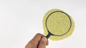 Magnifying glass increases the millet grains, motion up stock footage