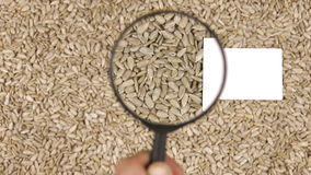 Magnifying glass increases the sunflower seeds and  business card stock footage