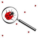 Magnifying glass with lady bugs. Over white background Royalty Free Stock Photos