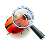 Magnifying glass and Ladybird Royalty Free Stock Image