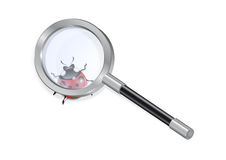 Magnifying glass and ladybird Stock Photography