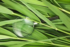 Magnifying glass on leaves of cane. Magnifying glass on the leaves of cane stock photo