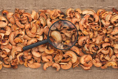 Magnifying glass lies on dried apple  and sacking Royalty Free Stock Image