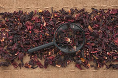 Magnifying glass lies on hibiscus  and sacking Stock Photography