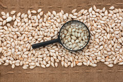 Magnifying glass lies on pumpkin seeds and sacking Stock Images