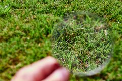 Magnifying glass observing the grass royalty free stock image