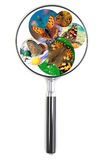 Magnifying glass over a photo with butterfly Stock Photos