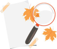 Magnifying glass, paper sheet and maple leaves. Education concept stock photo