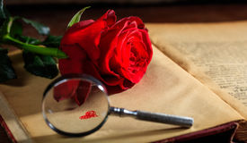 Magnifying glass and red rose on a book Royalty Free Stock Photography