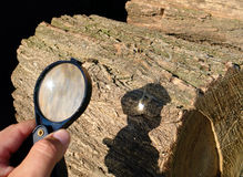 Magnifying glass starting fire Stock Images