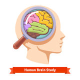 Magnifying glass zooming inside human head Stock Photos