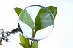 Magnifying plant Stock Photography